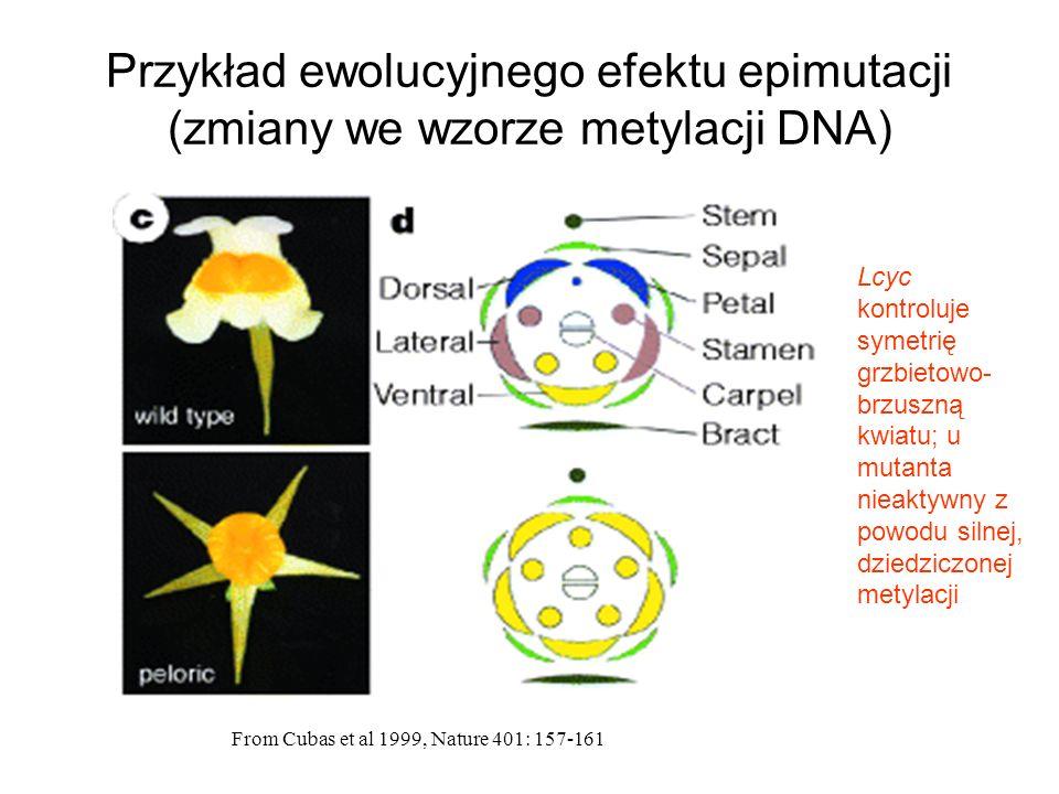 Przykład ewolucyjnego efektu epimutacji (zmiany we wzorze metylacji DNA)