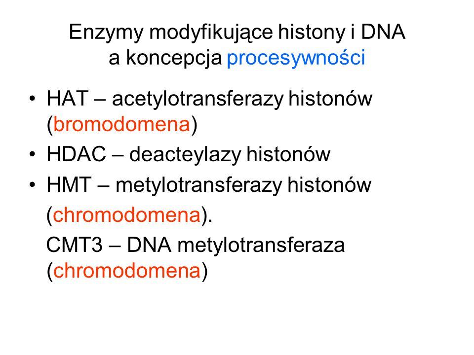 Enzymy modyfikujące histony i DNA a koncepcja procesywności