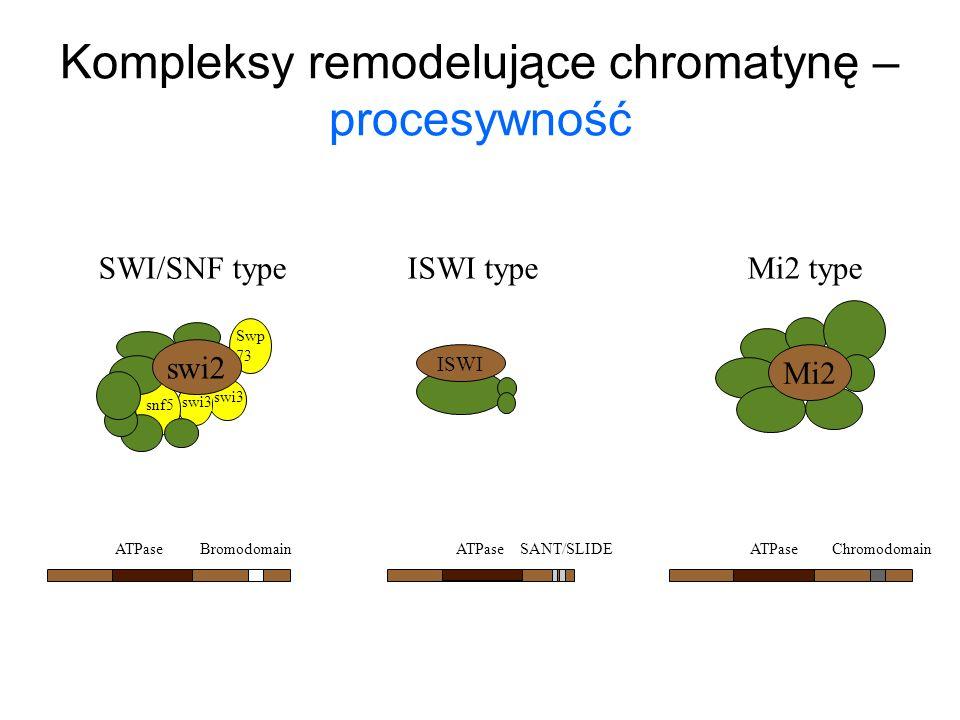 Kompleksy remodelujące chromatynę – procesywność