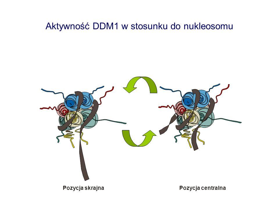 Aktywność DDM1 w stosunku do nukleosomu