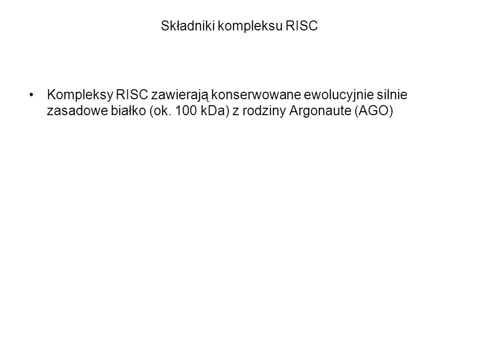 Składniki kompleksu RISC