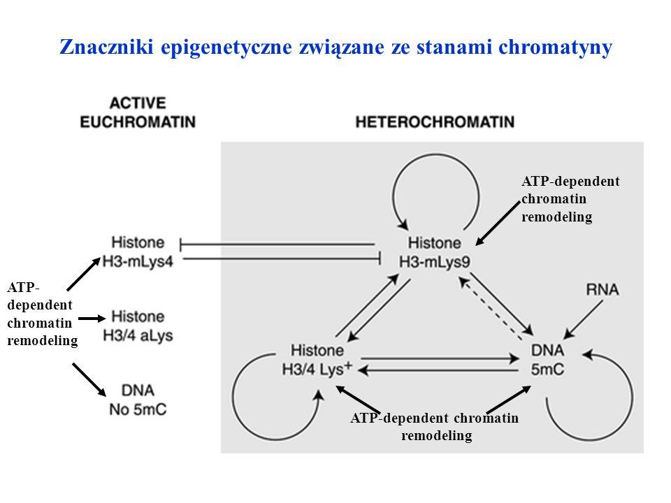 Znaczniki epigenetyczne związane ze stanami chromatyny