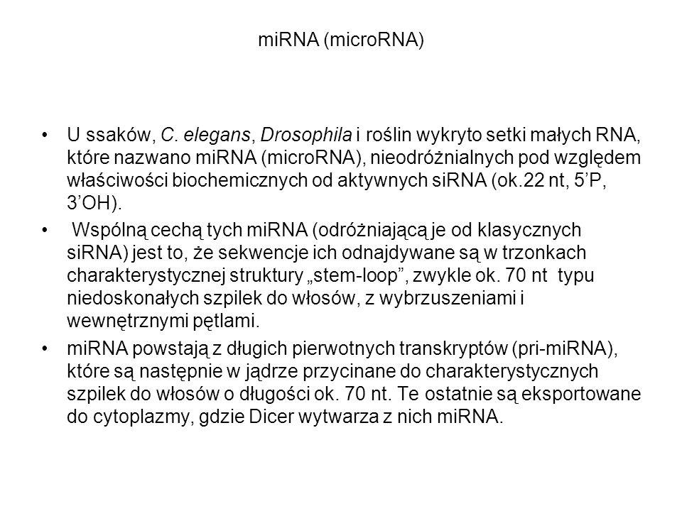 miRNA (microRNA)