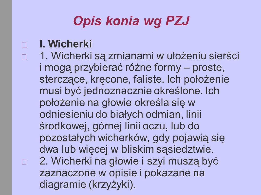 Opis konia wg PZJ I. Wicherki