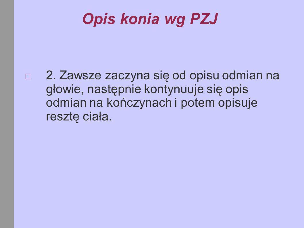 Opis konia wg PZJ 2.
