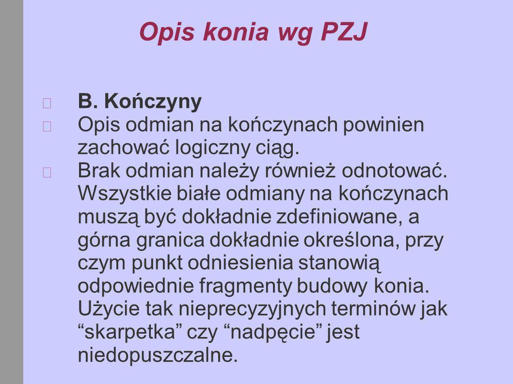 Opis konia wg PZJ B. Kończyny