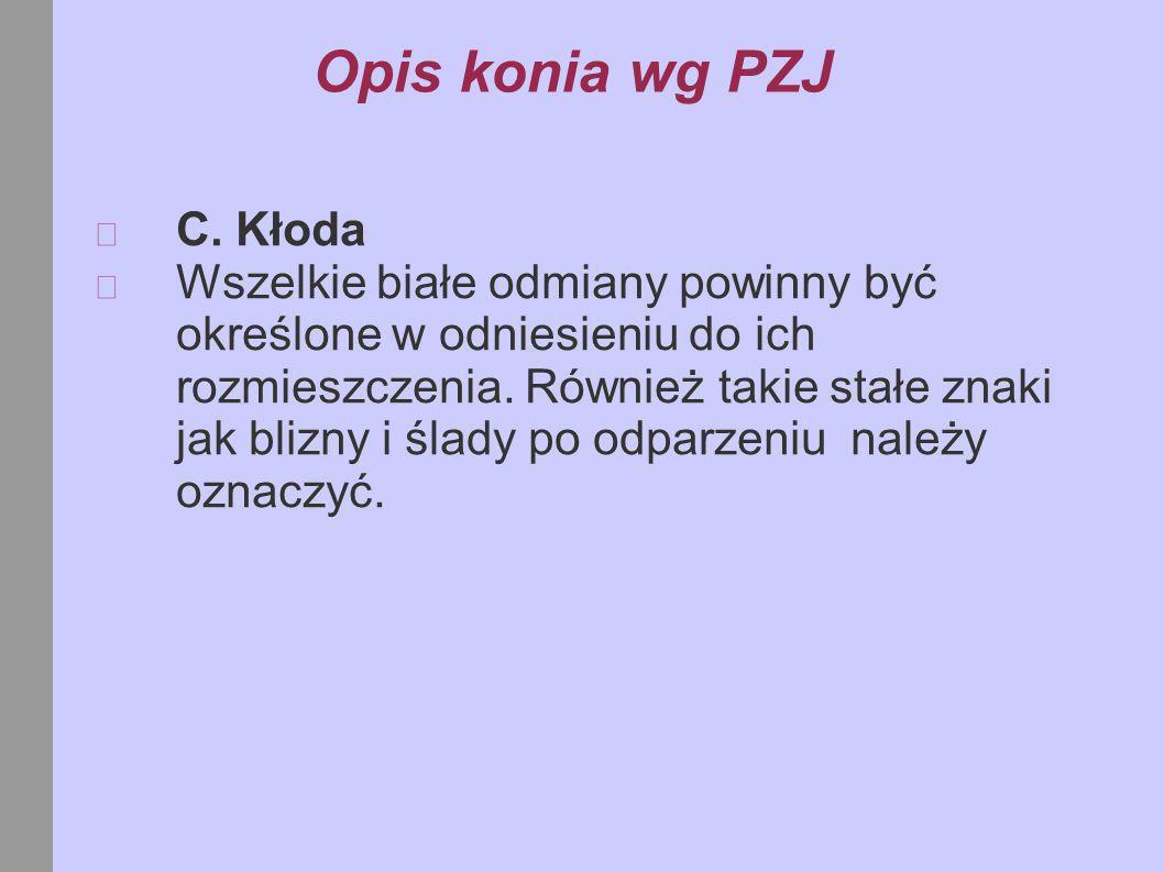 Opis konia wg PZJ C. Kłoda