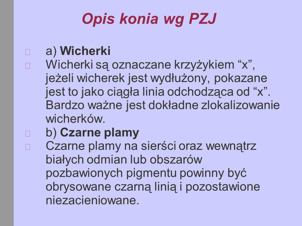 Opis konia wg PZJ a) Wicherki