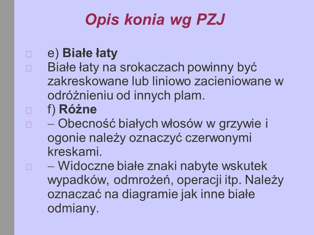 Opis konia wg PZJ e) Białe łaty
