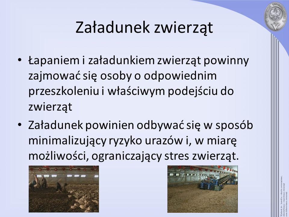 Załadunek zwierząt Łapaniem i załadunkiem zwierząt powinny zajmować się osoby o odpowiednim przeszkoleniu i właściwym podejściu do zwierząt.