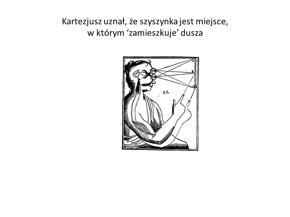 Kartezjusz uznał, że szyszynka jest miejsce, w którym 'zamieszkuje' dusza
