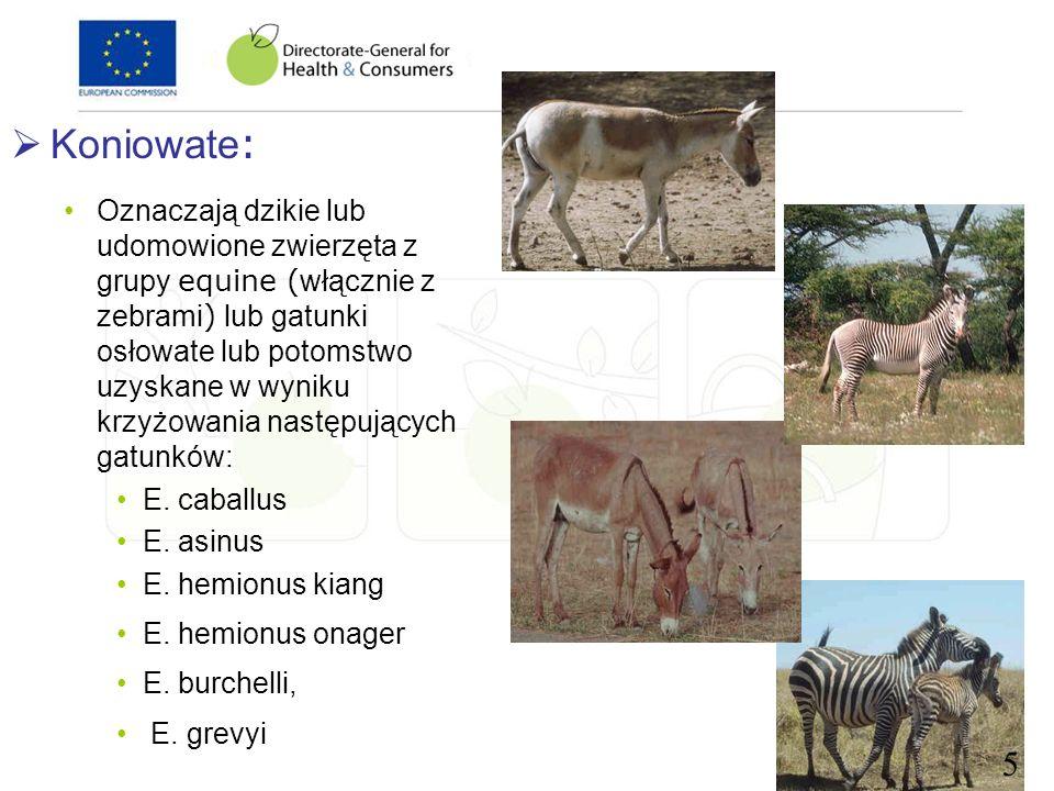 Koniowate: