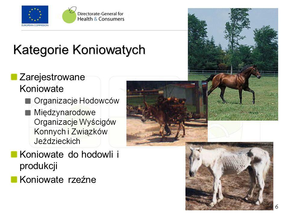 Kategorie Koniowatych