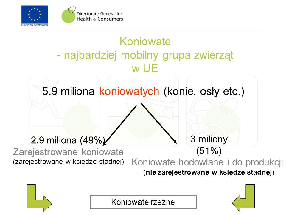 Koniowate - najbardziej mobilny grupa zwierząt w UE