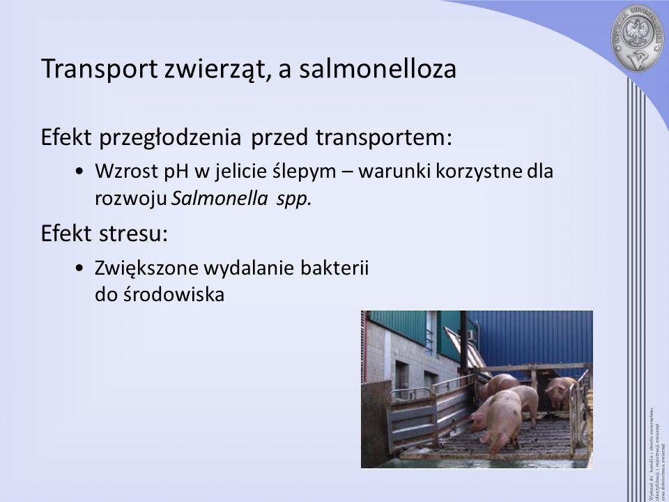 Transport zwierząt, a salmonelloza