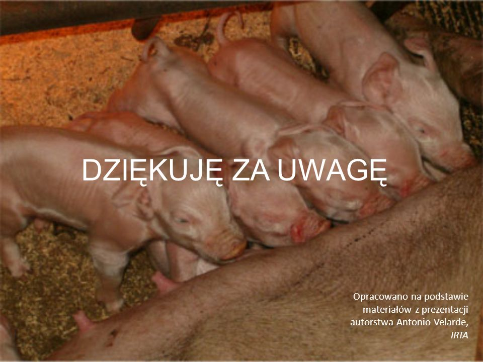 DZIĘKUJĘ ZA UWAGĘ Opracowano na podstawie materiałów z prezentacji autorstwa Antonio Velarde, IRTA.