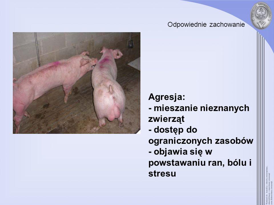 - mieszanie nieznanych zwierząt - dostęp do ograniczonych zasobów