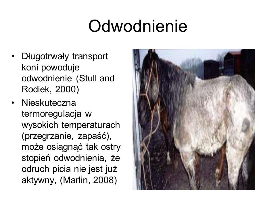 Odwodnienie Długotrwały transport koni powoduje odwodnienie (Stull and Rodiek, 2000)
