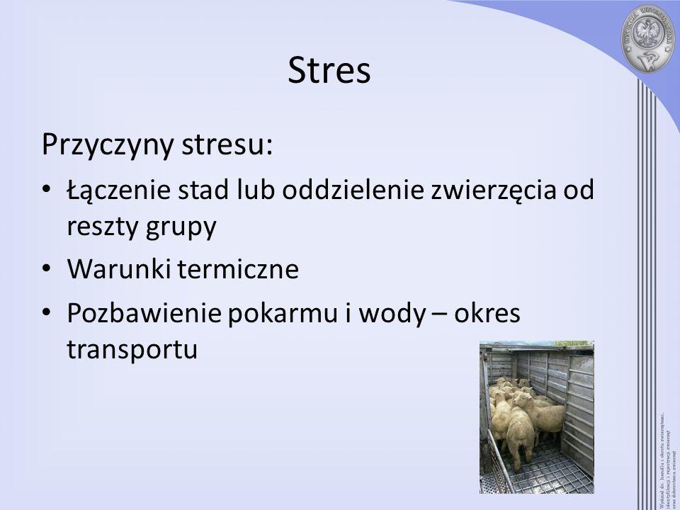 Stres Przyczyny stresu: