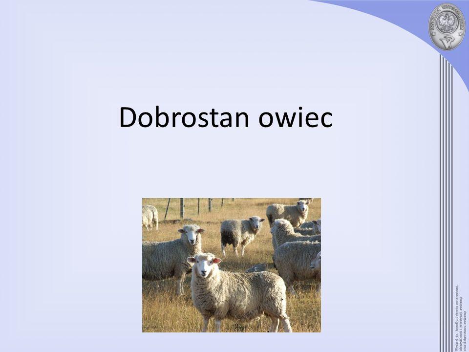 Dobrostan owiec
