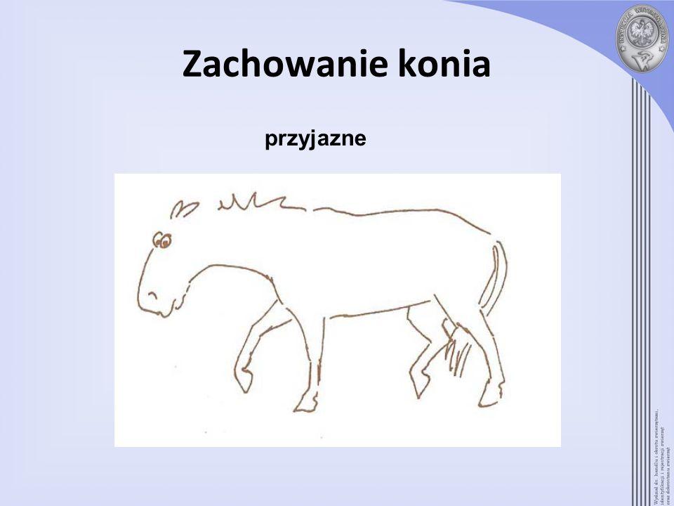 Zachowanie konia przyjazne