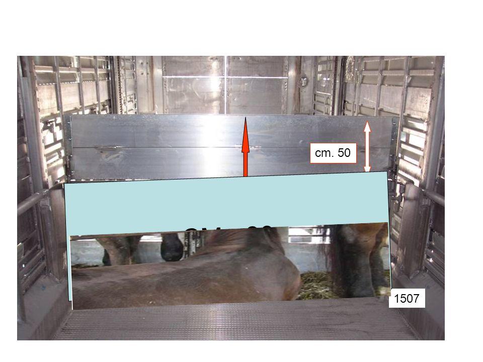 cm. 50 CM. 80 cm. 130 cm. 80 1507