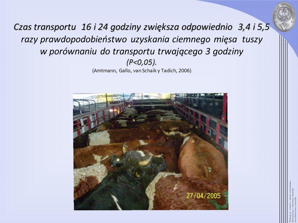 Czas transportu 16 i 24 godziny zwiększa odpowiednio 3,4 i 5,5 razy prawdopodobieństwo uzyskania ciemnego mięsa tuszy w porównaniu do transportu trwającego 3 godziny (P<0,05).