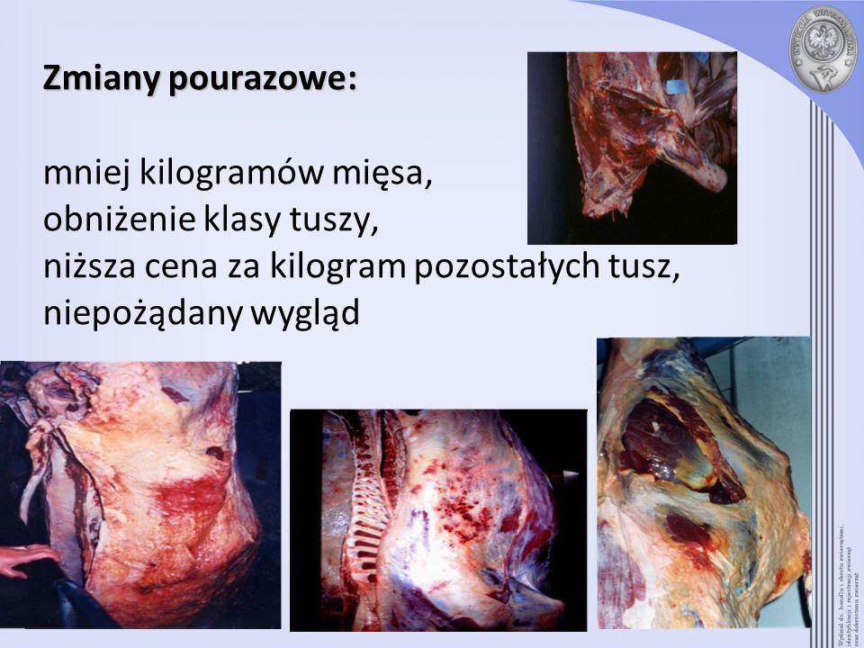 Zmiany pourazowe: mniej kilogramów mięsa, obniżenie klasy tuszy, niższa cena za kilogram pozostałych tusz, niepożądany wygląd