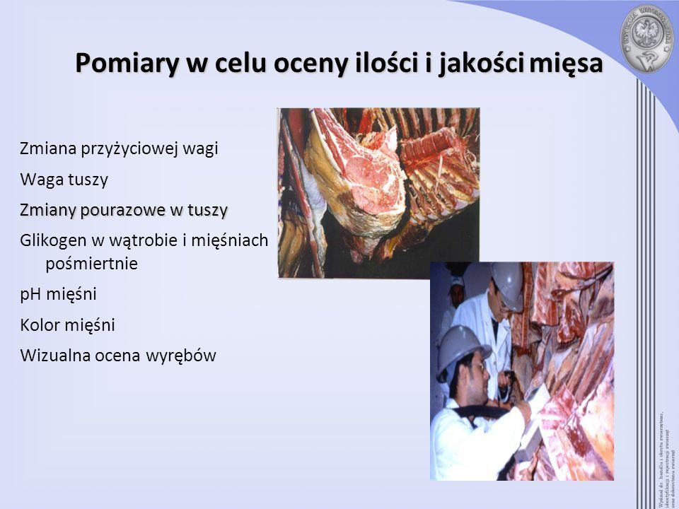 Pomiary w celu oceny ilości i jakości mięsa