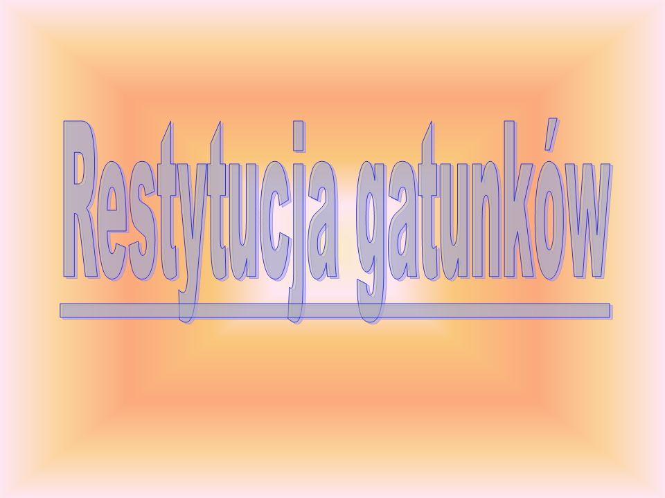 Restytucja gatunków
