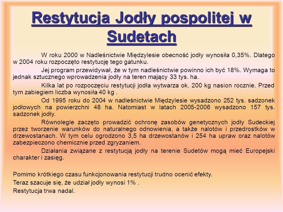 Restytucja Jodły pospolitej w Sudetach