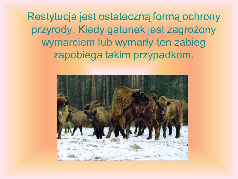 Restytucja jest ostateczną formą ochrony przyrody