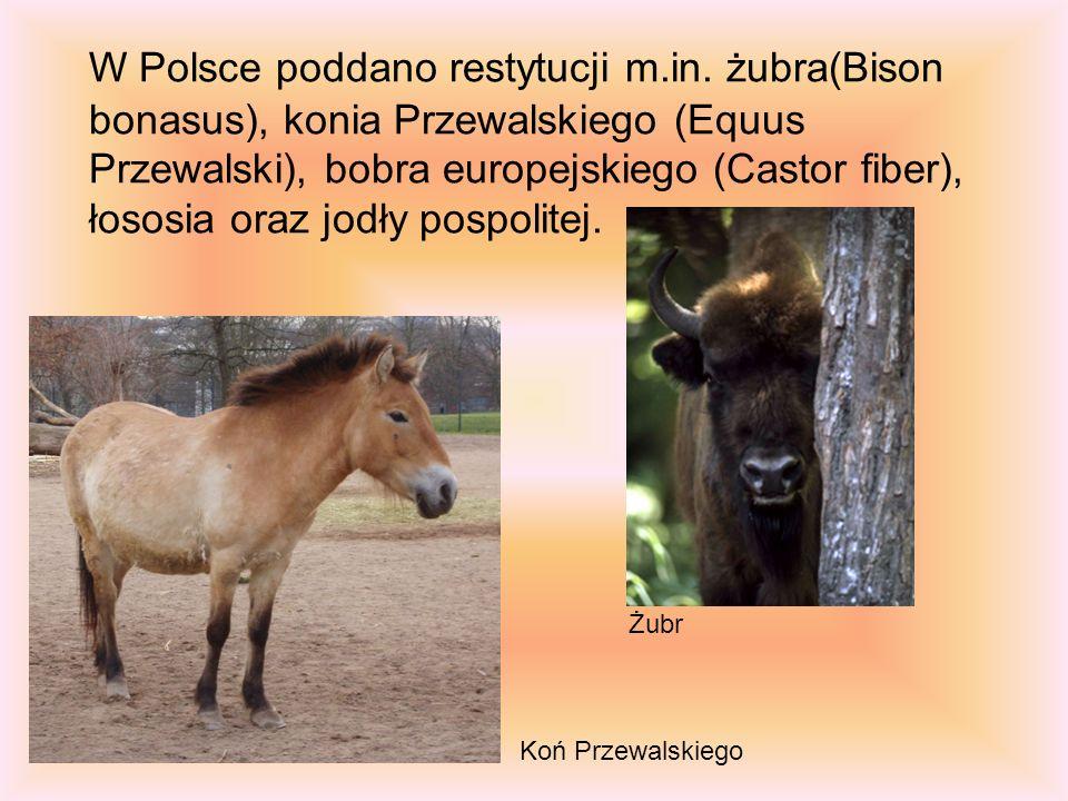 W Polsce poddano restytucji m. in