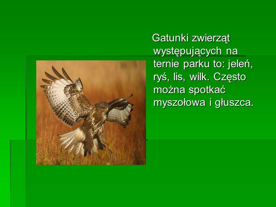 Gatunki zwierząt występujących na ternie parku to: jeleń, ryś, lis, wilk.