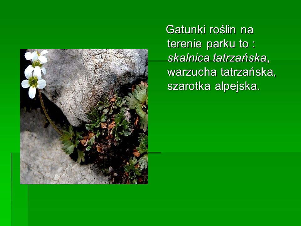 Gatunki roślin na terenie parku to : skalnica tatrzańska, warzucha tatrzańska, szarotka alpejska.