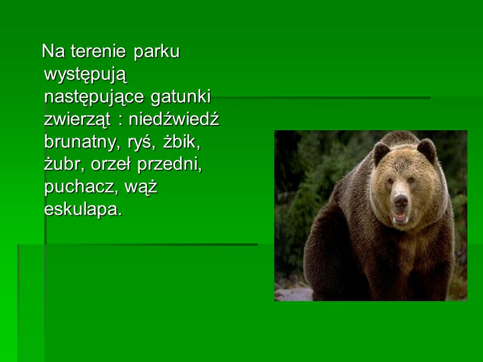 Na terenie parku występują następujące gatunki zwierząt : niedźwiedź brunatny, ryś, żbik, żubr, orzeł przedni, puchacz, wąż eskulapa.