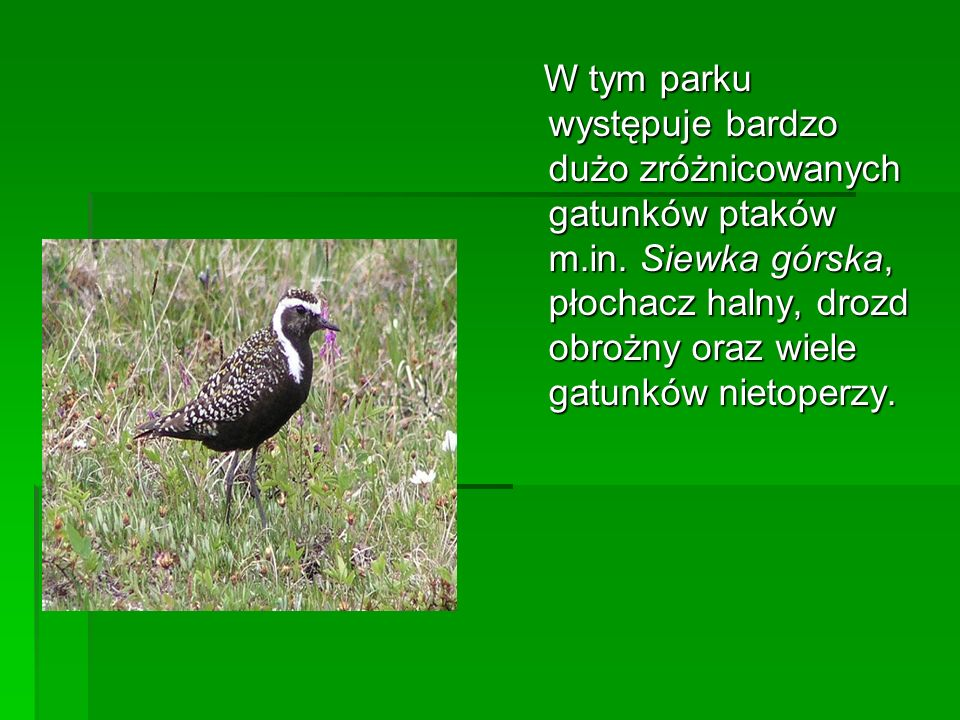 W tym parku występuje bardzo dużo zróżnicowanych gatunków ptaków m. in