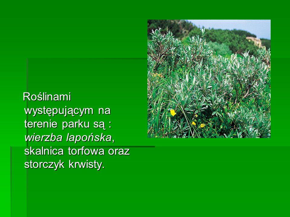 Roślinami występującym na terenie parku są : wierzba lapońska, skalnica torfowa oraz storczyk krwisty.
