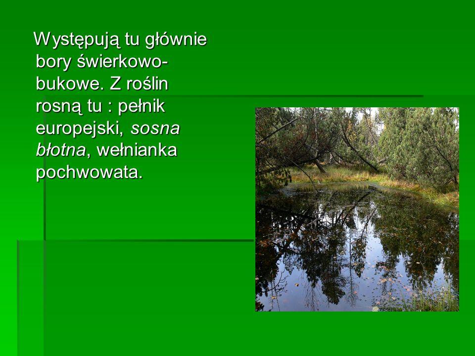 Występują tu głównie bory świerkowo-bukowe