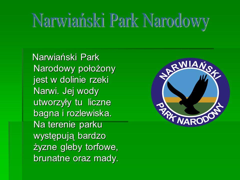 Narwiański Park Narodowy