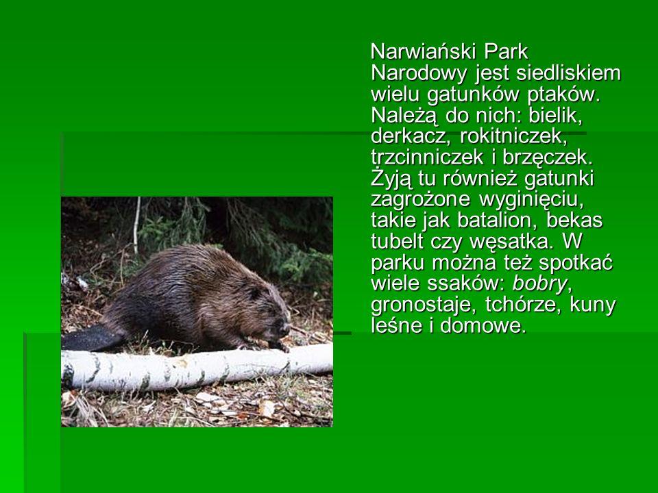 Narwiański Park Narodowy jest siedliskiem wielu gatunków ptaków