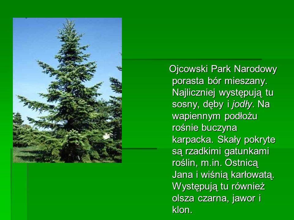 Ojcowski Park Narodowy porasta bór mieszany
