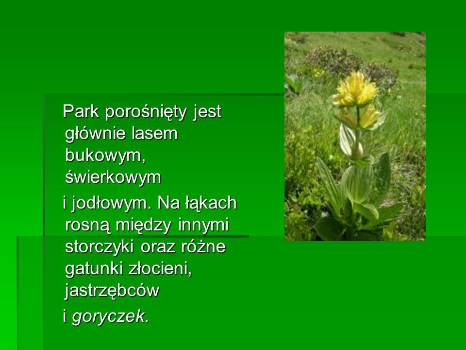 Park porośnięty jest głównie lasem bukowym, świerkowym