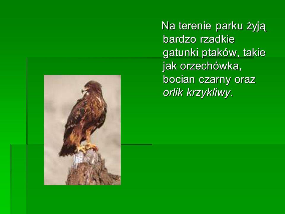 Na terenie parku żyją bardzo rzadkie gatunki ptaków, takie jak orzechówka, bocian czarny oraz orlik krzykliwy.