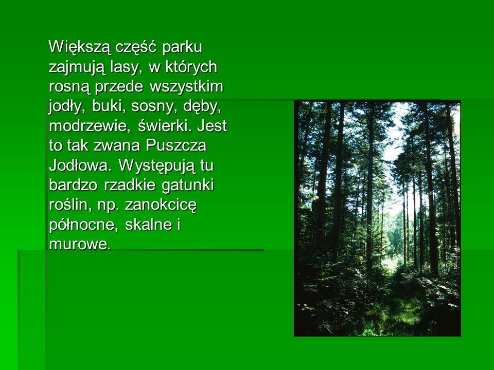 Większą część parku zajmują lasy, w których rosną przede wszystkim jodły, buki, sosny, dęby, modrzewie, świerki.