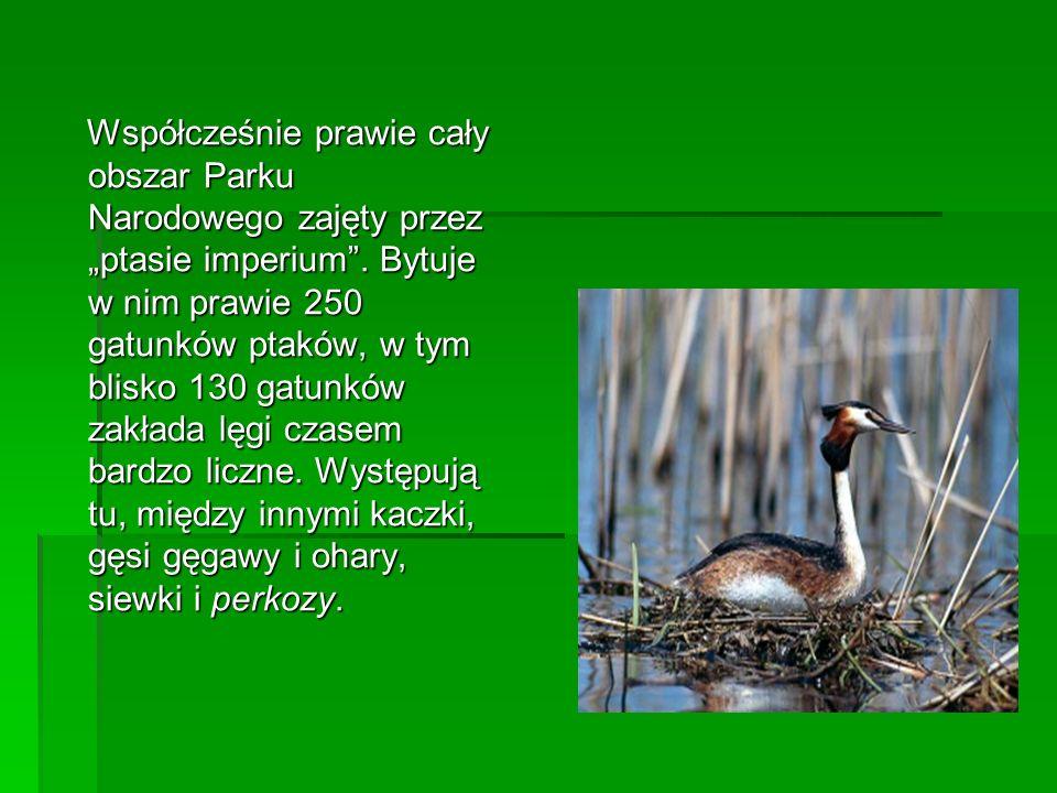 """Współcześnie prawie cały obszar Parku Narodowego zajęty przez """"ptasie imperium ."""