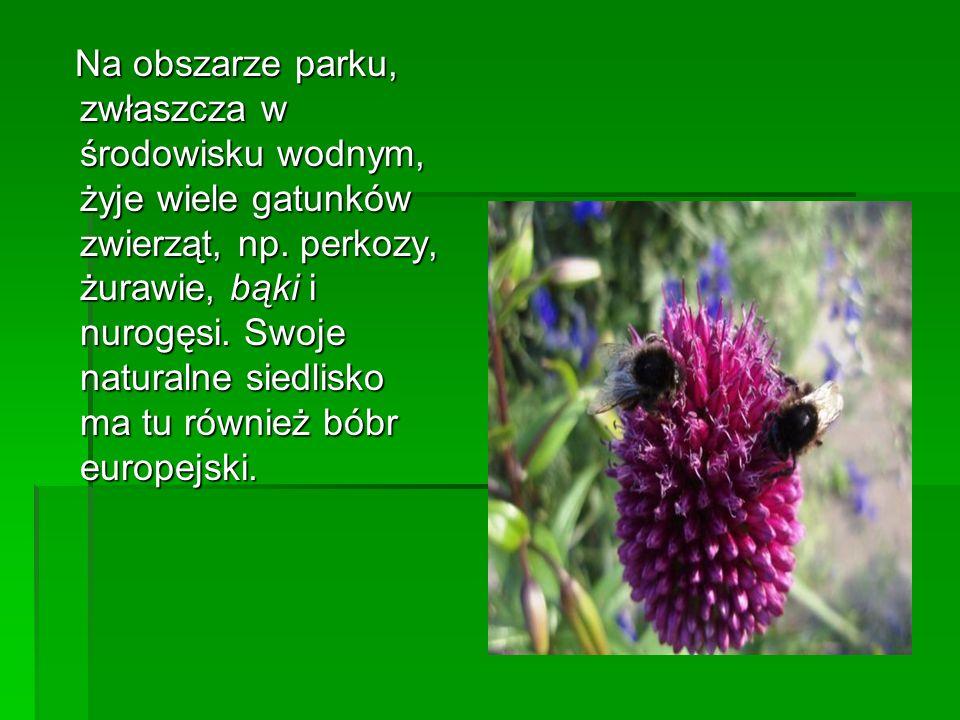Na obszarze parku, zwłaszcza w środowisku wodnym, żyje wiele gatunków zwierząt, np.