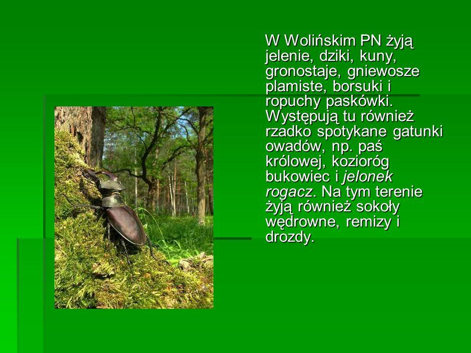 W Wolińskim PN żyją jelenie, dziki, kuny, gronostaje, gniewosze plamiste, borsuki i ropuchy paskówki.