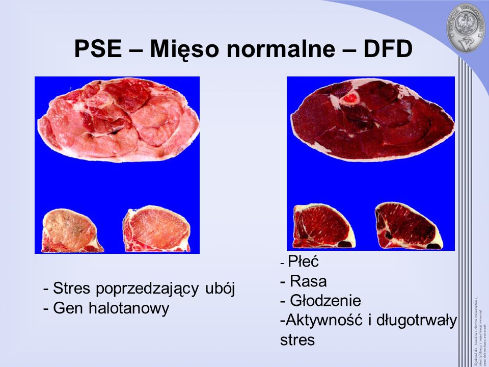 PSE – Mięso normalne – DFD