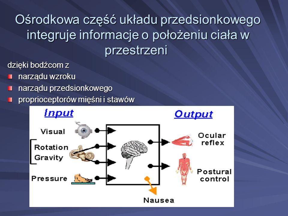 Ośrodkowa część układu przedsionkowego integruje informacje o położeniu ciała w przestrzeni